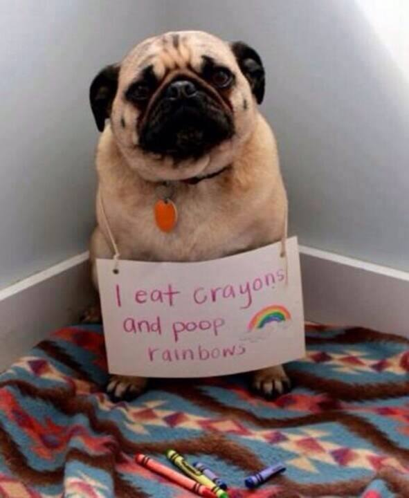dog shaming pics