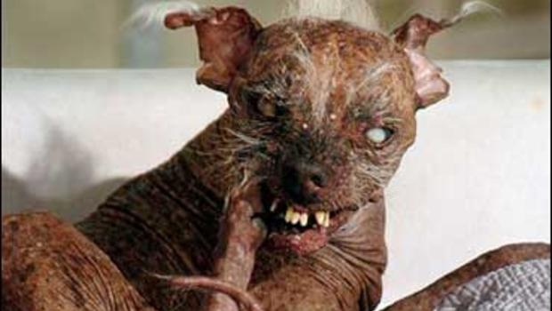 ugliest dogs in the world